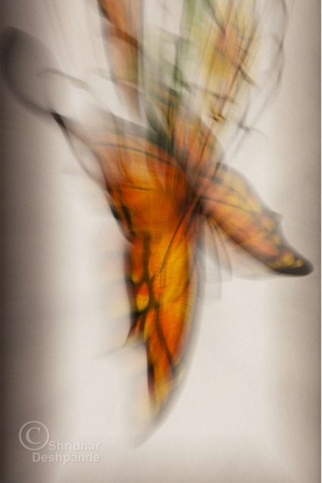 Abstract-Flutter