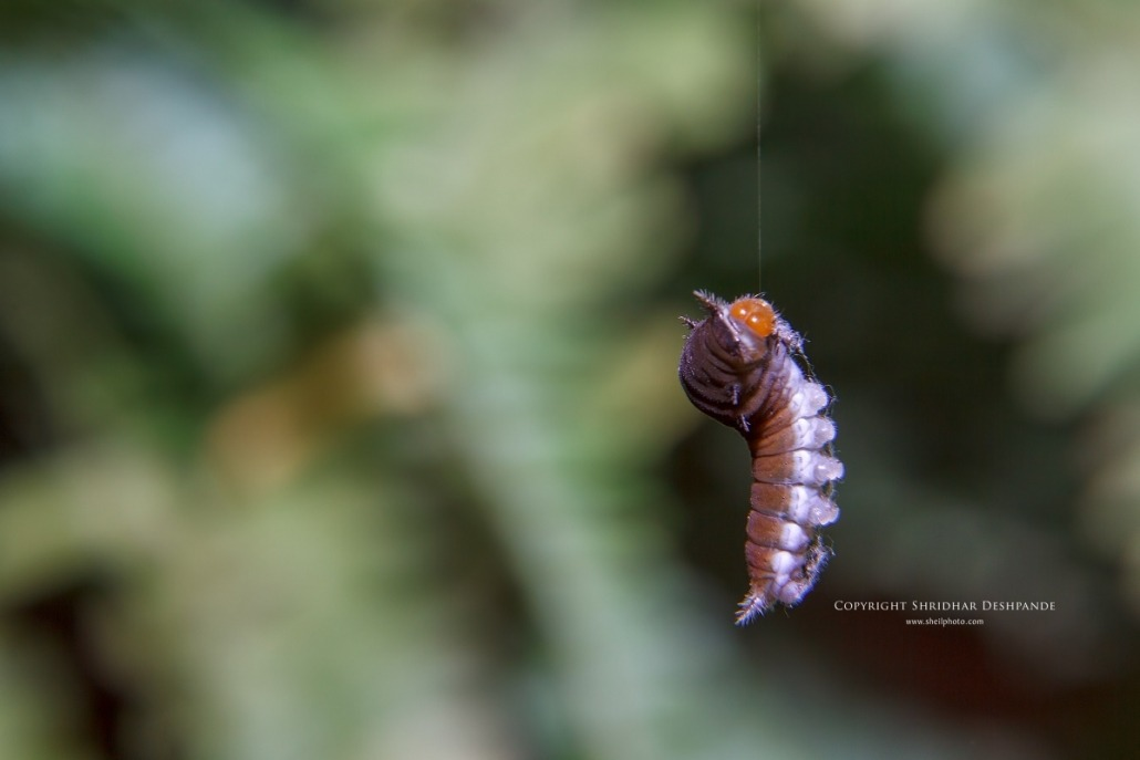 Caterpillar mid-air dance